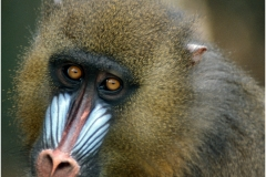 Mandrill for printing copy