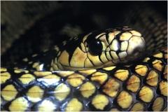 Snake copy