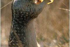 Squirl copy