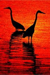 Orlando cranesHC copy