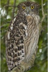 OwlNepal