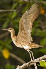 PanamaCruisebird copy