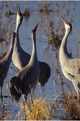 Up Cranes copy