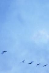 V birds copy
