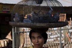 Burma 2011.110