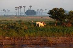 Burma 2011.119