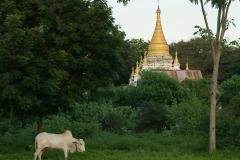 Burma 2011.148