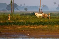Burma 2011.223