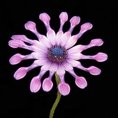 Flower 2 Sharp fixed