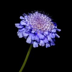gardedn purple