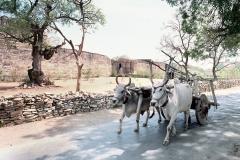 India-072