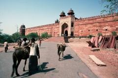 India-173