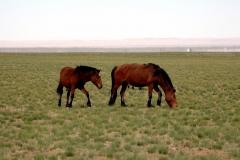 Mongolia 2005.059