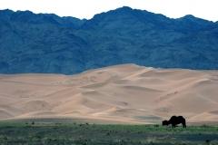 Mongolia 2005.060