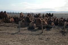 Mongolia 2005.072