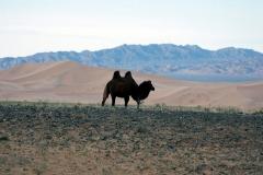 Mongolia 2005.080