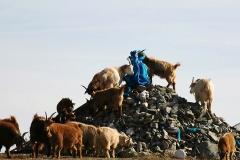 Mongolia 2005.095