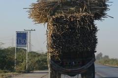 Pakistan.104