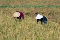 Vietnam.147