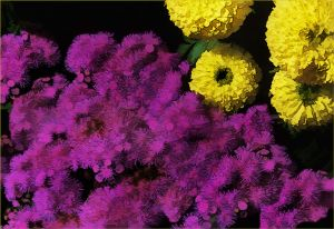 05-YellowPurplewFlowers18x12.jpg