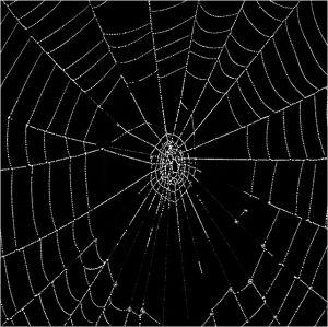 03-Spiderweb17.jpg
