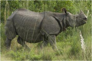 Rhino.jpg